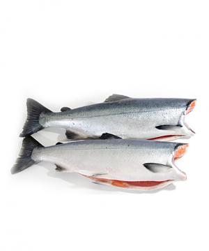 Cá Hồi Na-Uy nguyên con - bỏ đầu (Giao hàng trong HCM)